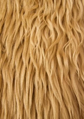 Close up of a sheep wool shepards jacket