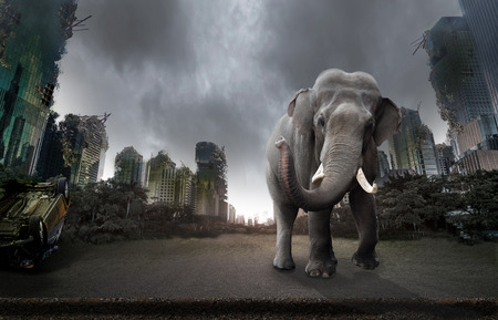 City destroyed by war and an elephant