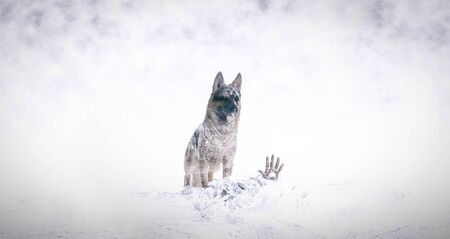 Rescue in the snow with german shepherd dog