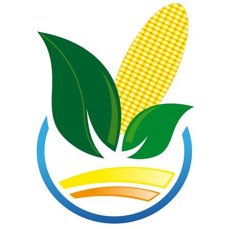 corn on the cob: Abstract icon of corn cob