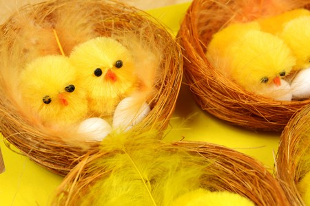 brooder: Chicks sitting on eggs in nests. Easter decoration