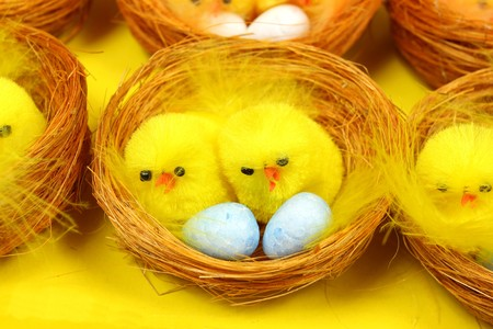 brooder: Group of chickens sitting on eggs in nests. Easter decoration
