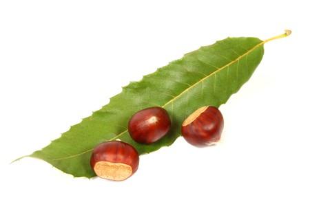 castanea sativa: Castanea sativa - three chestnuts and leaf isolated over white Stock Photo