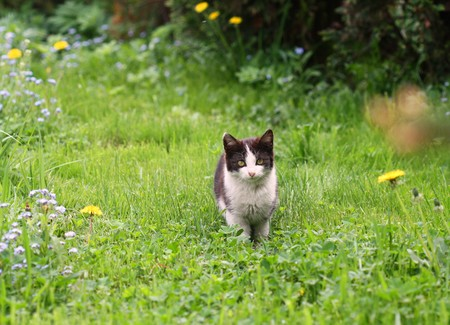 distrustful: Black and white cat in garden