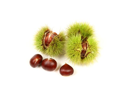 spiky: Fresh chestnuts in spiky cupules isolated on white background Stock Photo