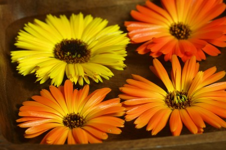 Four marigolds - yellow and orange, floating on water in wooden bowl. Therapeutic calming spa treatment photo