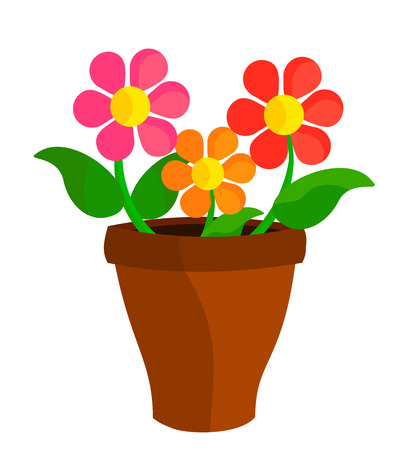 Colorful flowers in flowerpot
