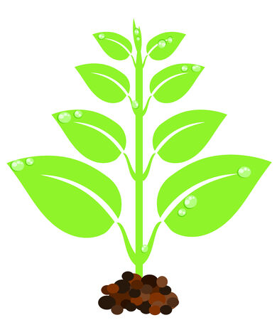 New born green plant with droplets Vector