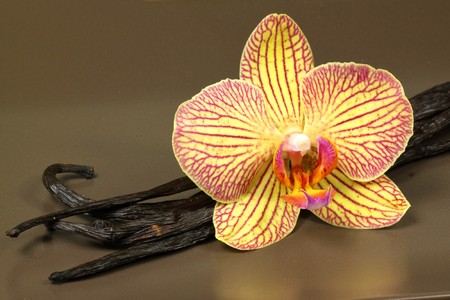 Orchid flower and vanilla beans on plate photo