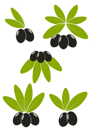 aceite de oliva virgen extra: Conjunto de aceitunas negras con emblemas de hojas