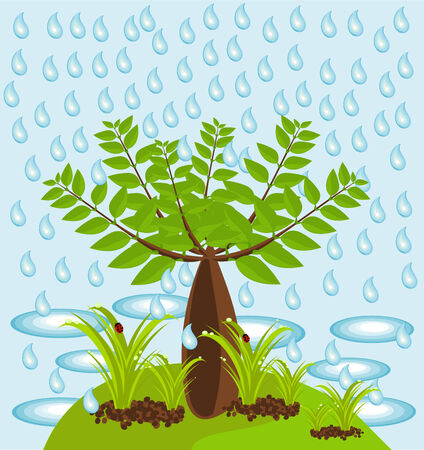 An isle with big baobab tree and plants in rain Vector