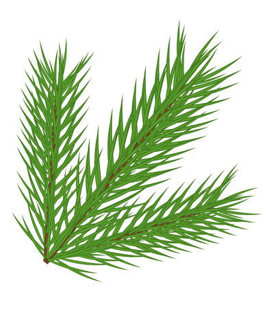pine decoration: fir branch isolated