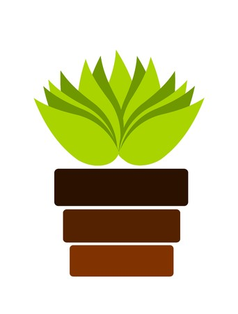 new plant: Green plant in pot. illustration Stock Photo