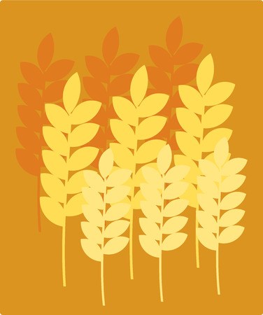Ripe wheat ears illustration Vector