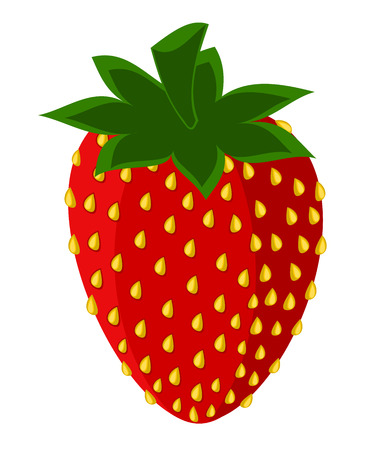 wild strawberry: Delicious red strawberry with seeds isolated over white - vector illustration