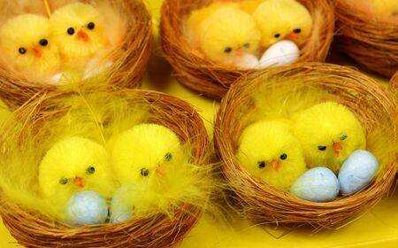 brooder: Easter chicks in nests Stock Photo