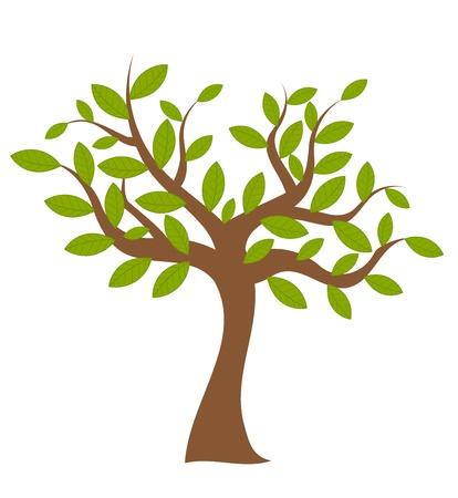 albero della vita: Albero di primavera con foglie verdi su bianco. Illustrazione vettoriale