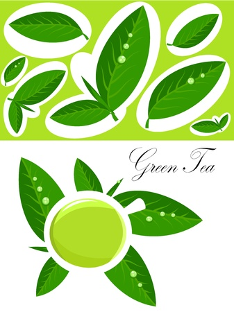 faience: White cup of green tea and fresh tea leaves background. Vector illustration