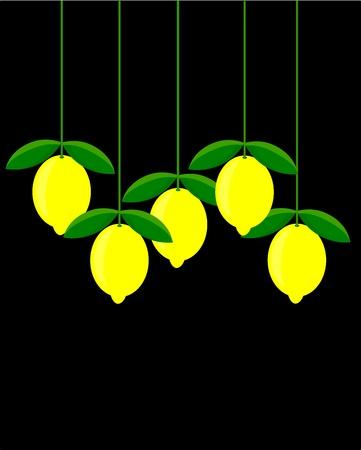 lemon tree: Lemons in group hanging over black background Illustration