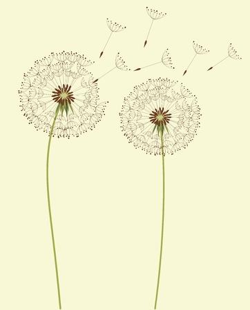 Dry dandelion flowers Vector