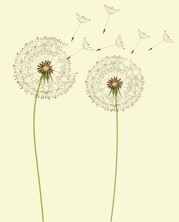 flores vintage: Dry dandelion flowers Illustration