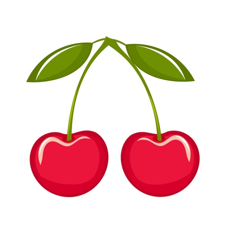 pink cherry: Delicious cherries over white.  Illustration