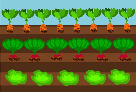 root crop: Vegetables growing on path under blue sky Illustration