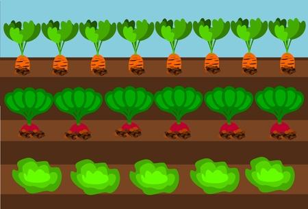 veggies: Vegetables growing on path under blue sky Illustration