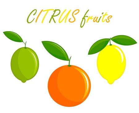 lime: Citrus whole fruits: orange, lemon and lime. Vector illustration