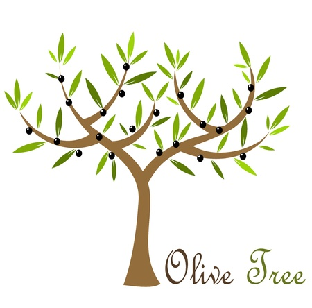 olive tree isolated: Olive tree with black olives. Vector illustration Illustration