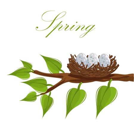 Nido de pájaro en la rama de un árbol. Se acerca la primavera! Ilustración vectorial