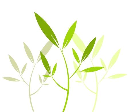 organic spa: Delicate floral plant pattern - vector illustration Illustration