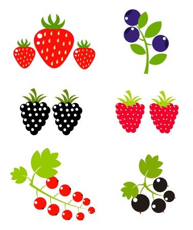 moras: Colecci�n de dulce de frutas de Berry. Ilustraci�n vectorial Vectores
