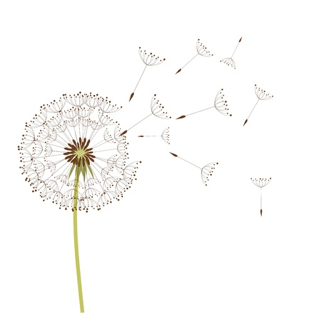 gentle: Dandelion in the wind. Vector background Illustration