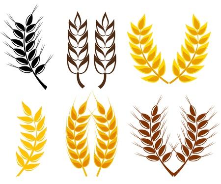 wheat harvest: Set di orecchie di cereali - simboli di frumento e segale.  Vettoriali