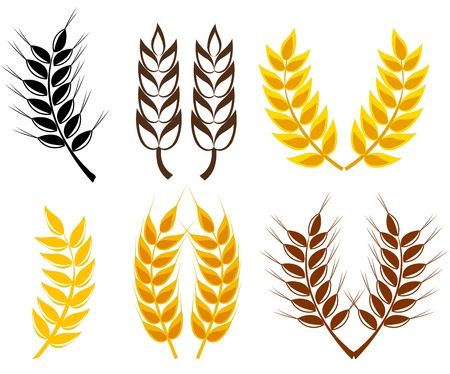 wheat illustration: Set of cereal ears - wheat and rye symbols.