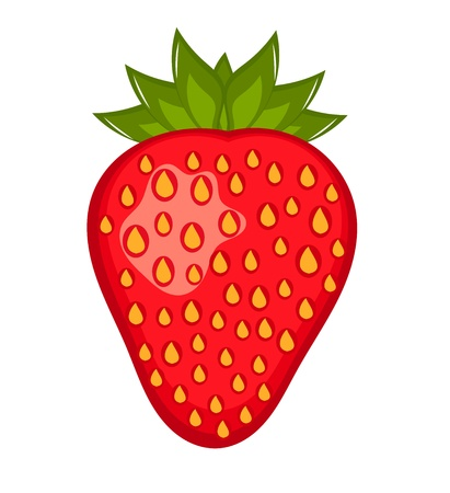 Strawberry fruit illustration Stock Vector - 10045657