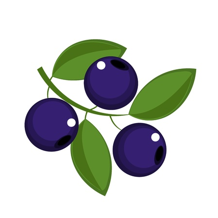 Blueberry vruchten icon - vector illustratie