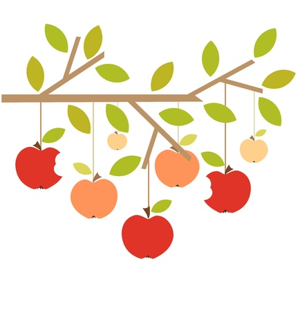 apple isolated: Apples on tree branch. Autumn vector illustration