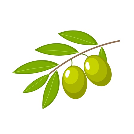 Branch with green olives. Vector illustration