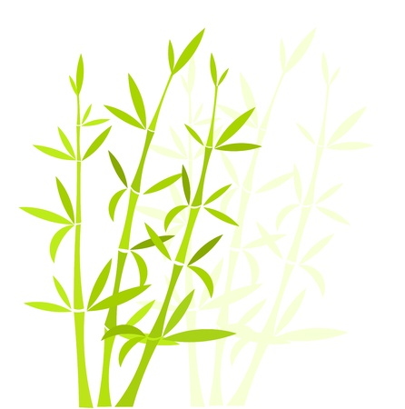 Bamboo background.  Illustration