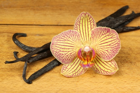 Vanillia and orchid flower photo
