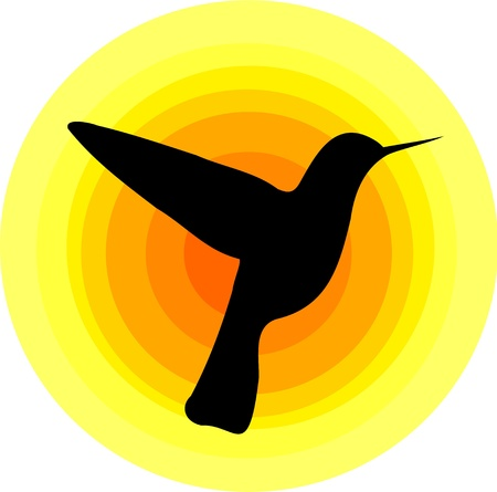 birds of paradise: Hummingbird silhouette over sun symbol.  design Illustration
