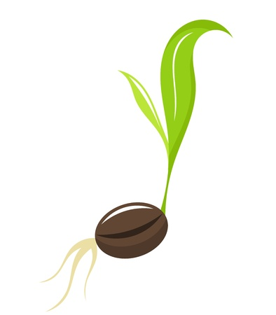 green coffee beans: Small newborn plant - seedling. illustration Illustration