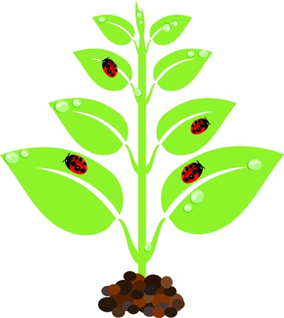 seedling growing: Green young new plant with droplets and ladybugs Illustration