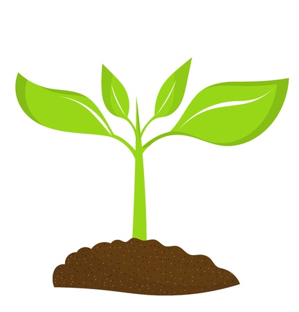 green coffee beans: Plant seedling growing in soil. illustration