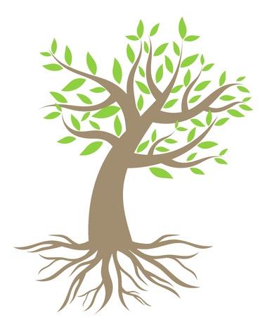arbol raices: Árbol con raíces. Ilustración vectorial