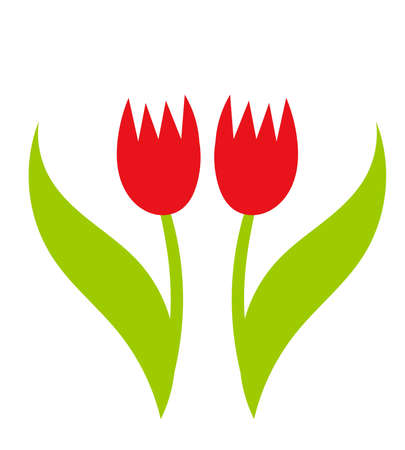tulips isolated on white background: Two red tulips over white background. Vector illustration