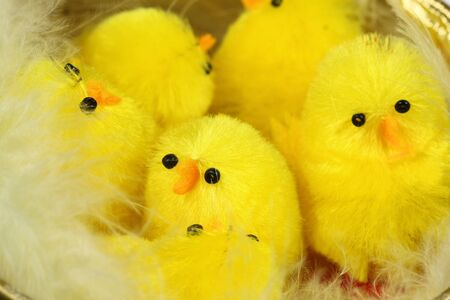 Cute Easter chicks in nest photo