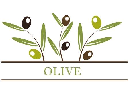 olivo arbol: Etiqueta de la rama de olivo. Ilustraci�n vectorial Vectores